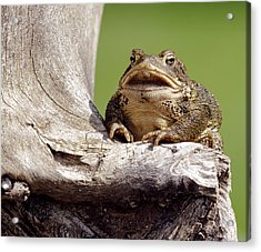 Frog Acrylic Print by David Lester