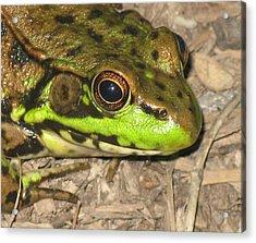 Frog Acrylic Print by Debbie Finley