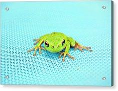 Frog Italy Acrylic Print
