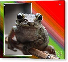Frog  Acrylic Print by Jeanne Andrews