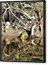 Frog King Acrylic Print