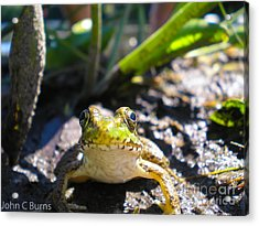 Acrylic Print featuring the photograph Frog Life by John Burns