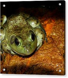 Frog Love Acrylic Print by LeeAnn McLaneGoetz McLaneGoetzStudioLLCcom