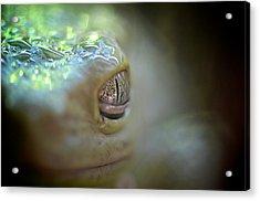 Frog Macro Acrylic Print
