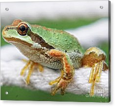 Frog On A Rope Acrylic Print by Billie-Jo Miller