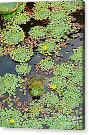 Acrylic Print featuring the photograph Frog Pond by Jeanne  Woods