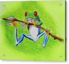 Frog Acrylic Print by Serene Maisey