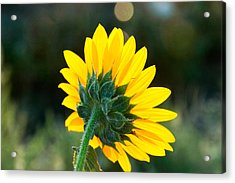 Acrylic Print featuring the photograph From Behind by Monte Stevens