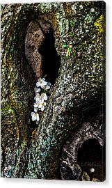 From The Heart Acrylic Print by Christopher Holmes