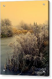 Frost Acrylic Print by Linsey Williams