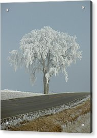 Acrylic Print featuring the photograph Frost On The Big Tree  by Penny Meyers