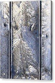 Frost Owl No01 Acrylic Print by Greta Thorsdottir