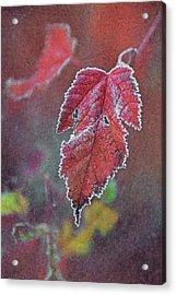 Frosted Acrylic Print by Odd Jeppesen