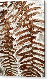 Frosty Fern Acrylic Print by Michael Standen Smith
