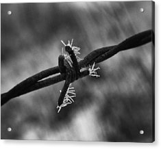 Acrylic Print featuring the photograph Frosty Thorn by Coby Cooper