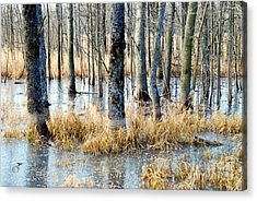 Frozen Forest Acrylic Print by Crissy Sherman