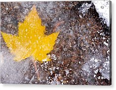 Acrylic Print featuring the photograph Frozen Leaf by Scott Holmes