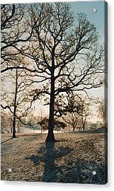 Frozen Oak Silhouette Acrylic Print