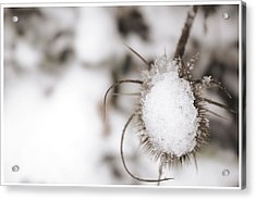 Acrylic Print featuring the photograph Frozen Plant by Lenny Carter