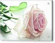 Frozen Rose Acrylic Print by Dm909