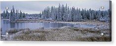 Frozen Swampland, Near 100 Mile House Acrylic Print by David Nunuk