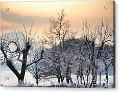 Frozen Trees Acrylic Print by Mats Silvan