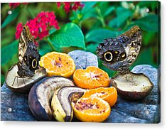 Fruit Of Life Acrylic Print