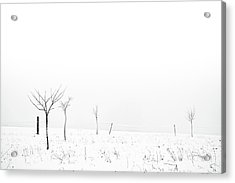 Fruit Trees Lost In Winter Fog Acrylic Print