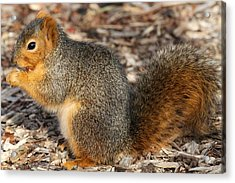 Acrylic Print featuring the photograph Fruity Squirel by Elizabeth Winter