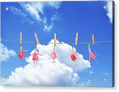 Fuchsia Blooms Acrylic Print by Amanda Elwell