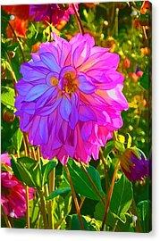 Fuchsia Delight Acrylic Print by Ken Stanback