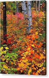 Full Fall Palette Acrylic Print by Larry Landolfi