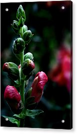 Acrylic Print featuring the photograph Full Of Life by Karen Harrison