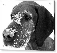 Fun In The Snow Acrylic Print by Gray  Artus
