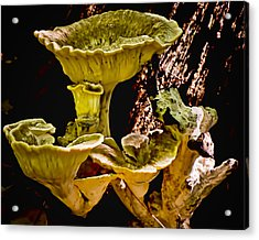 Fungus Among Us Acrylic Print by Michael Putnam