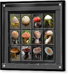 Fungus By Windowlight Acrylic Print