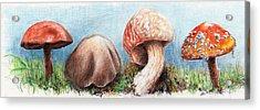 Fungus Panorama Acrylic Print
