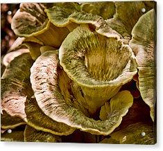 Fungus Tunnel Acrylic Print by Michael Putnam