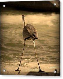 Funny Flamingo Acrylic Print by Radoslav Nedelchev