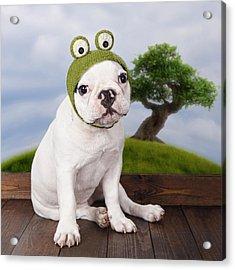 Funny French Bulldog Puppy Acrylic Print by Maika 777