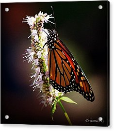 Further To Fly Acrylic Print