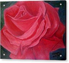 Fuschia Rose Acrylic Print