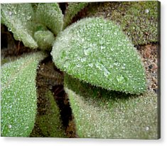 Fuzzy And Wet Acrylic Print by Terry Eve Tanner