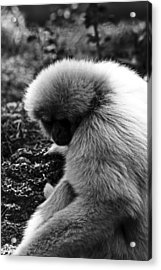 Fuzzy Monkey Acrylic Print