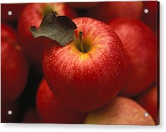Gala Apples Acrylic Print by Lyle Leduc