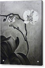Galen's Orchid Acrylic Print by Estephy Sabin Figueroa