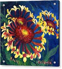 Gallardia Acrylic Print by Raette Meredith