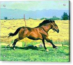 Gallope Acrylic Print by Odon Czintos