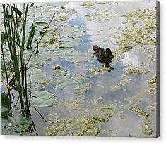 Garden Duck Acrylic Print by Audra Crouch
