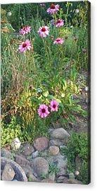Garden Flowers And Rocks Acrylic Print by Thelma Harcum